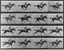 Étude de la course du cheval, E. Muybridge